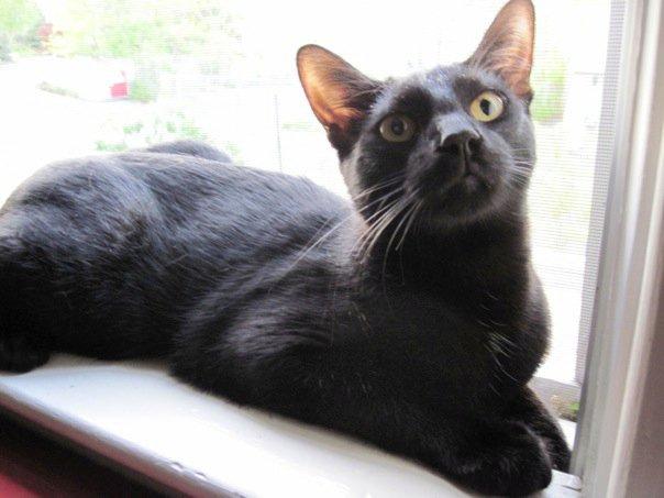 Jackson on the window sill